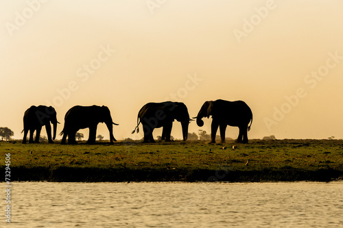 Staande foto Olifant African Elephant in Chobe National Park