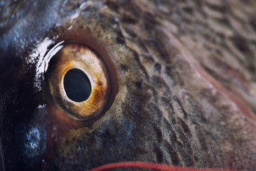 Fish eye close up