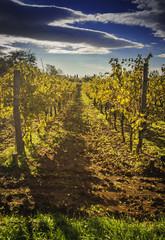 Beautiful Mediterranean vineyard on a sunny day