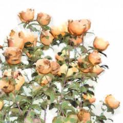 Flower Watercolor Roses Bush