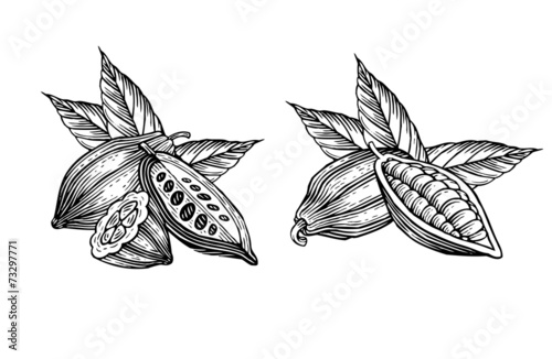 cocoa beans - 73297771
