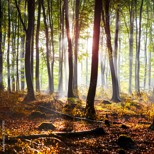 canvas print picture Herbstwald