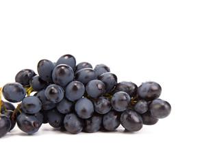 Branch of black ripe grapes.