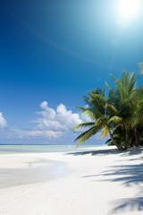 Ocean and coconut palm, Kuramathi