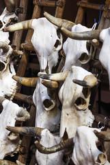 Rinderschädel auf einem Markt in Santa Fe