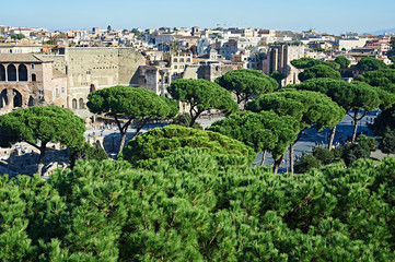 Landscape with trees of city Rome