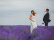 Wedding lavender field.