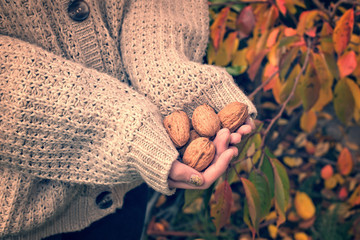 Girl with woolen sweater holding wallnuts