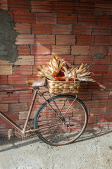 Old bicycle wit a basket full of corncobs