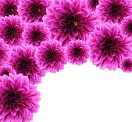 Beautiful Dahlias background