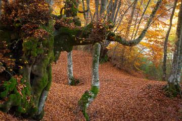 Magico autunno in Italia