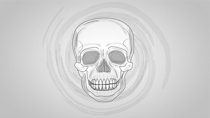 Illustration of Human Skull on shaded background