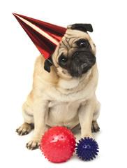 emotional pug in a festive hat