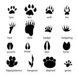 Fototapety set of different animal tracks