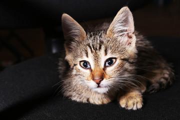 Kitten on dark background
