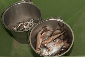 Vismaaltijd voor de dieren.