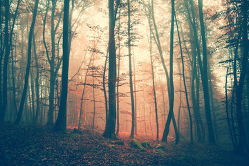 Mystic vintage color forest scene