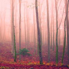 Purple color season forest