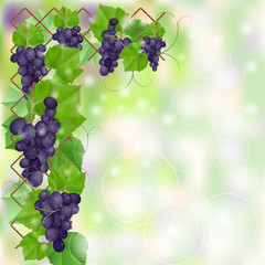 Autumn card with blue grapes