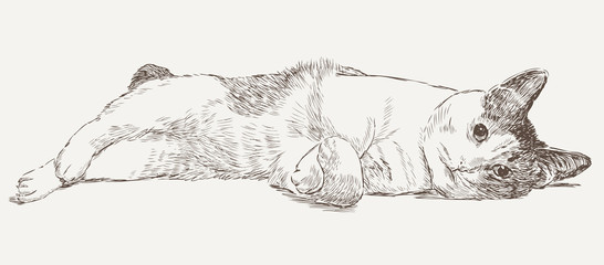 sketch of a lying cat