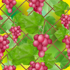different varieties of grapes with leaves on white background