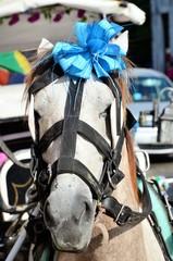 wedding horse mexico