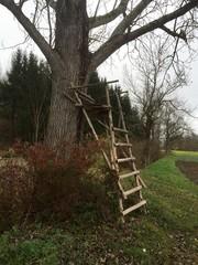 Hochsitz lehnt an großem Baum