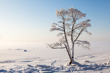 Frozen tree on winter bay and blue sky