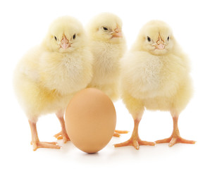 chickens and egg