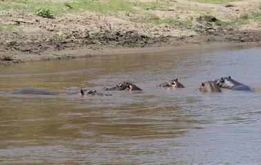 Flusspferde im See