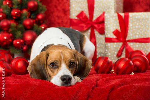 canvas print picture Weihnachtshund