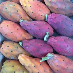 Fruchtfarben - lila-orange