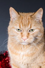 portrait of a cat in front of tree garland