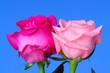 canvas print picture - Rose Floral arrangement