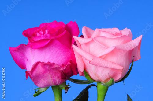 canvas print picture Rose Floral arrangement