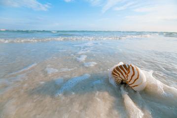 nautilus shell on white Florida beach sand under the sun light