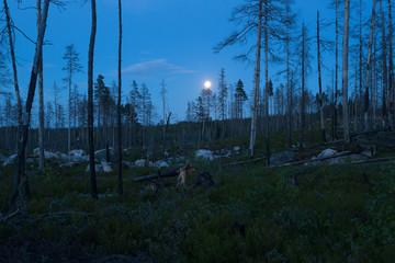 Night scene from Pajso, dalarna