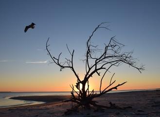 Osprey Departing Driftwood