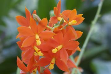 Orangene Orchidee