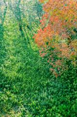 草原と紅葉