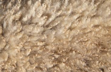 羊の毛 背景