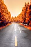 autumnal asphalt road - 73336166