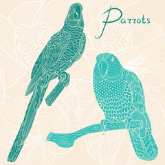 Two parrots. Vector illustration
