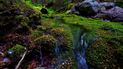 Moss Covered Forest and Stream