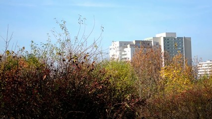 high-rise block of flats - housing estate with autumn nature
