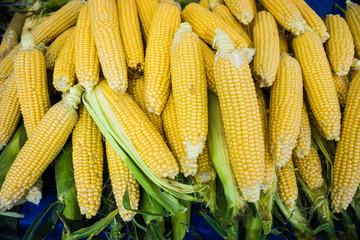 Grains of ripe corn.Raw corn, Fresh corn.