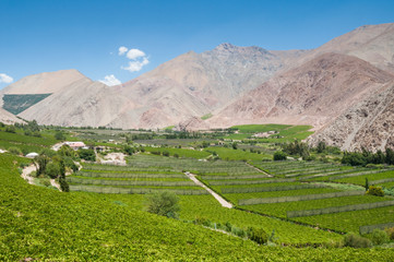 Vineyards of Elqui valley, Chile