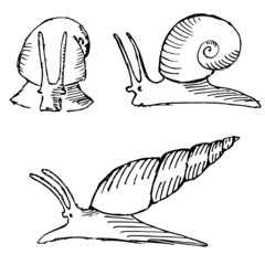 Snails sketch set