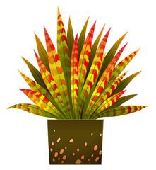 A house plant