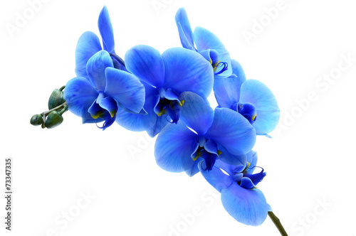 Papiers peints Orchidée Blue flower orchid